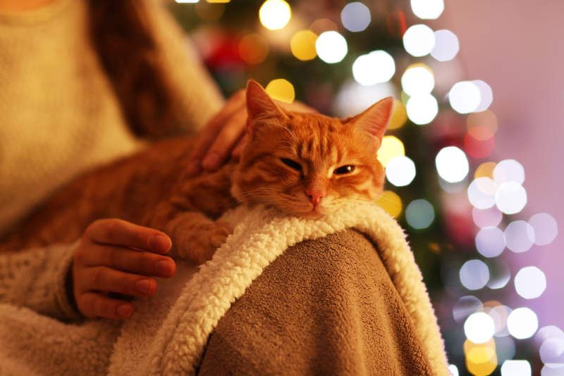 8 Ways to Keep the Holidays Stress-free for Your Cat
