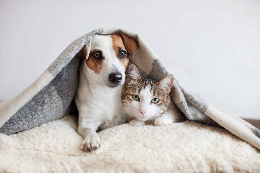 You can do a lot to help your cat and dog feel more confident when they are stressed.