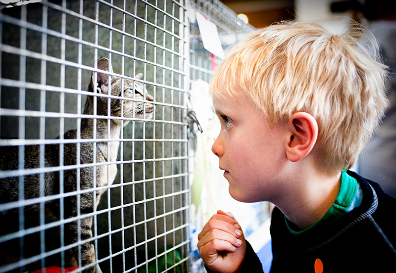 blonde boy looking at gray kitten looking through shelter cage