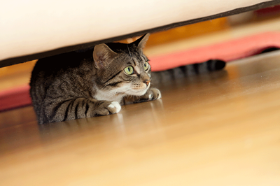 tabby cat scared hiding under bed