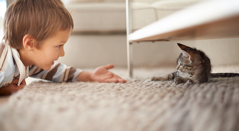 little boy laying on floor reaching hand out to brown kitten under coffee table