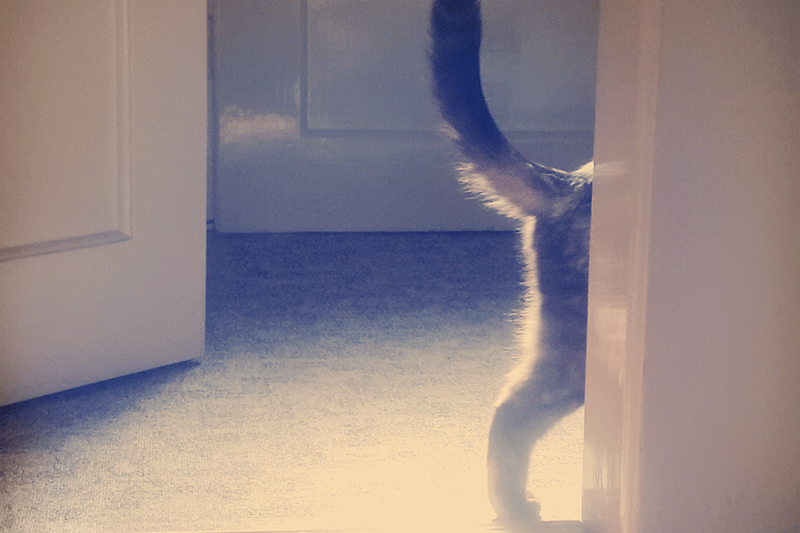 cat walking through opened door tail and one leg showing