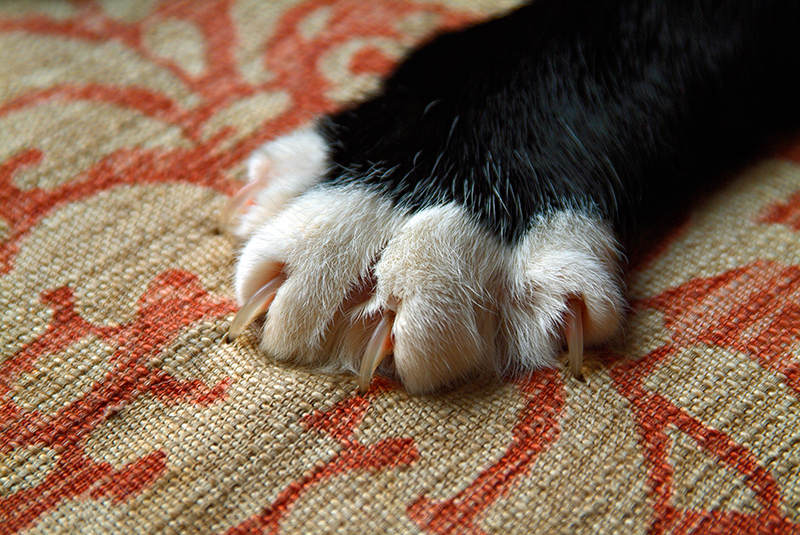black and white tipped cat claw nails digging into rug