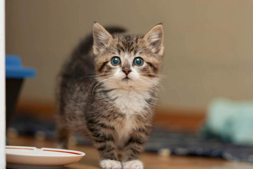 What Do I Need to Know When I Bring a New Kitten Home?