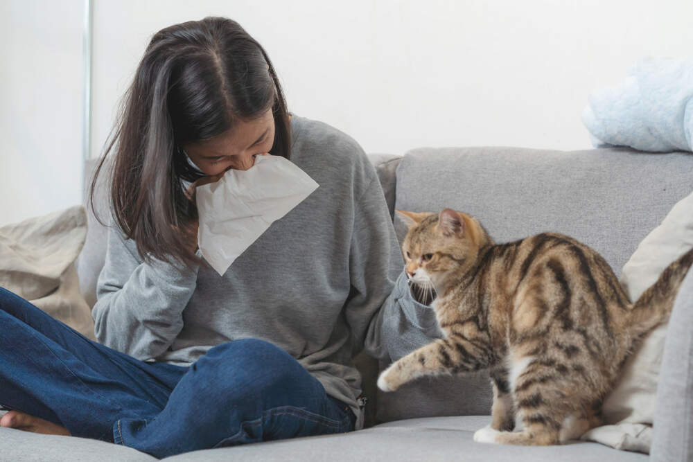 Woman sneezing next to cat because she's developing a cat allergy.