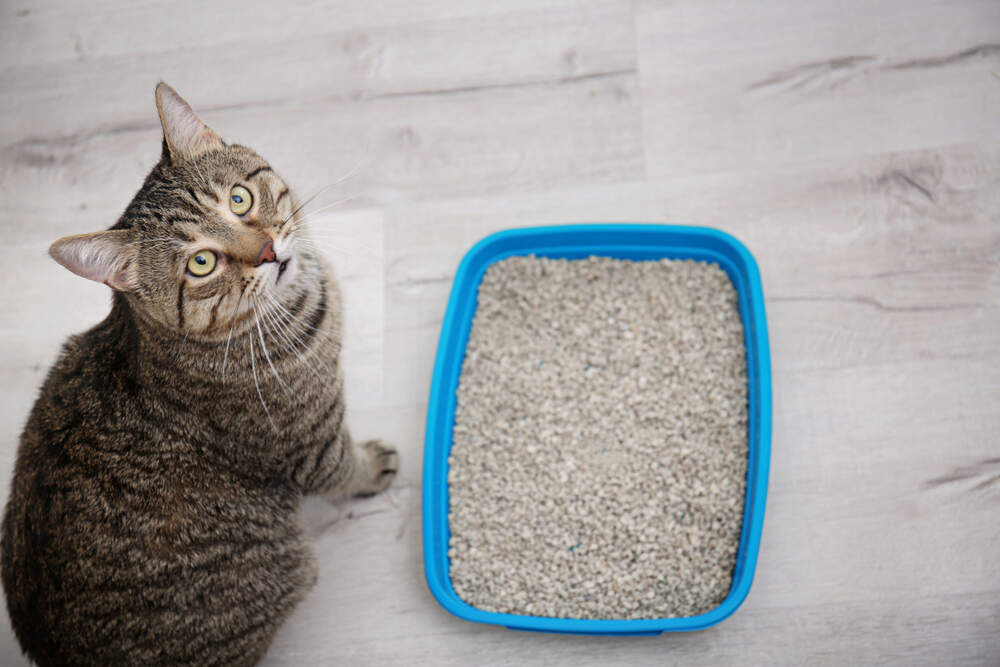 Cat doesn't cover poop in litter box.