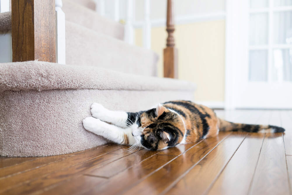 Some cats love the feel of carpet under their claws.