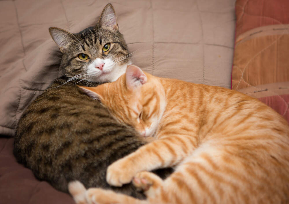 "If cats are given their own resources and a slow ""reintroduction,"" they can learn to get along again."
