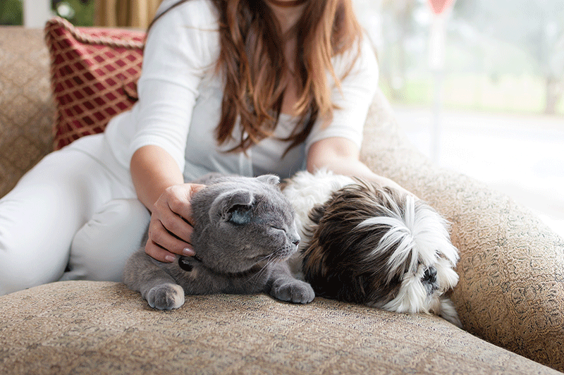 red haired woman wearing white sitting on couch petting gray cat and brown and white dog