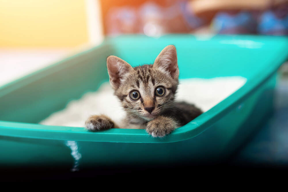 Most kittens will learn to use their litter box pretty easily.