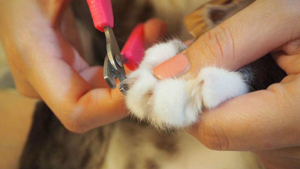 Trimming your cat's nails successfully is all about setting the right mood and having a lot of patience.