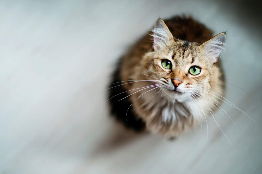 Extra attention and daily rituals can help you form a deep bond with your cat.