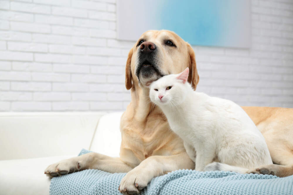 Introducing your cat to your new dog or new cat can go smoothly if you take the introductions slowly.