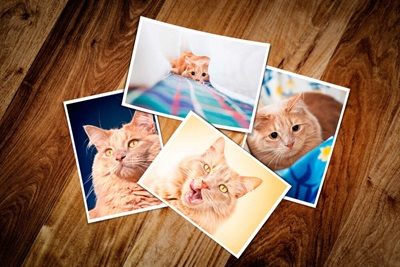 cat photos for frame