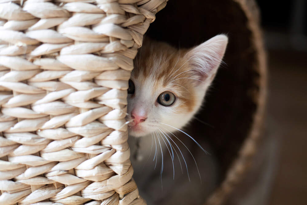 Is your cat hiding a lot? You may need to take some proactive steps to help your cat feel more confident.