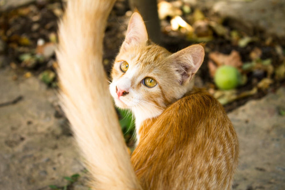 Cats wag their tails for a variety of reasons, including when they're happy or hunting.