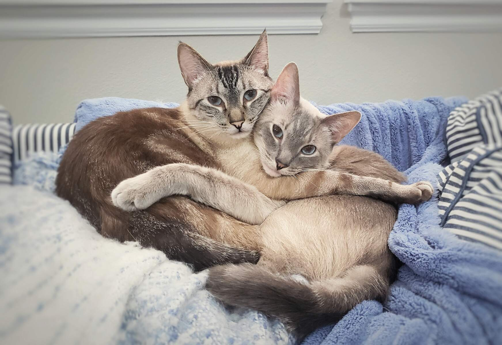 Willy and Simba relax together on the sofa.