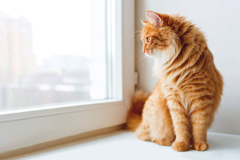 Your cat will be okay when he's home alone while you're at work, if you help prepare him.