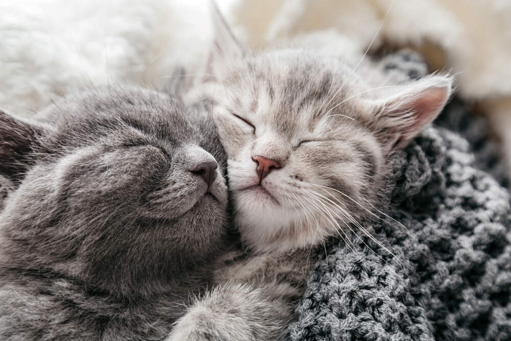 Take care when introducing your cat to your new kitten.