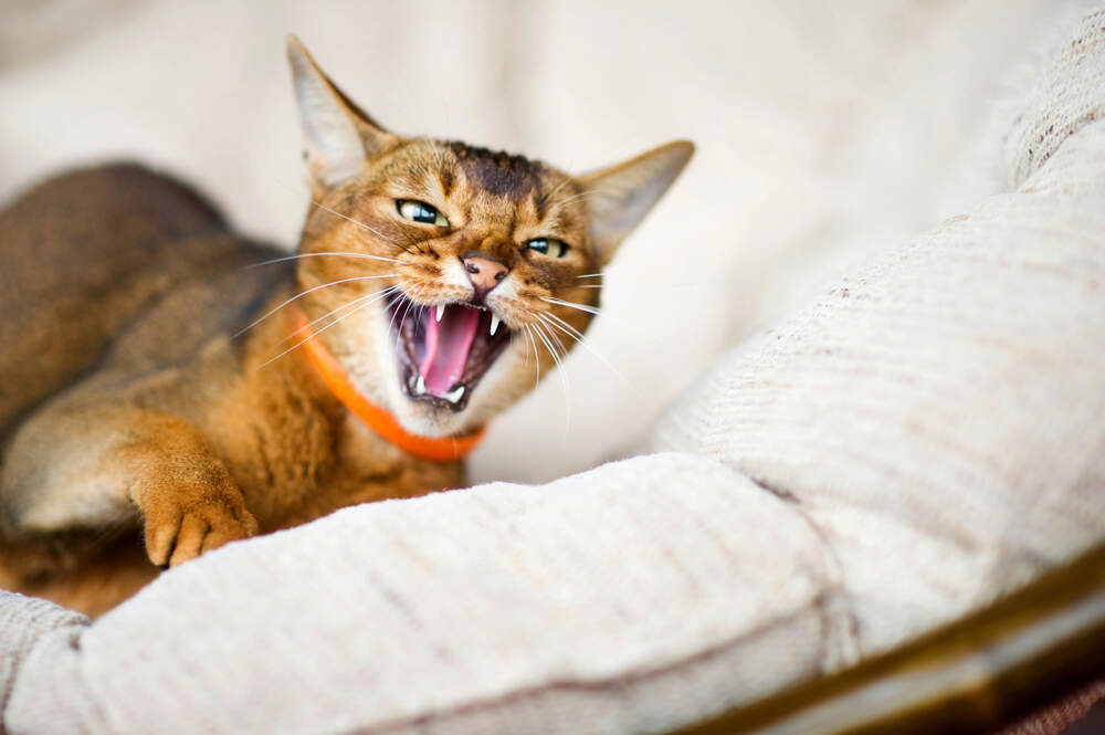 Cats may hiss and act upset for different reasons, but you can do a lot to help them feel better.